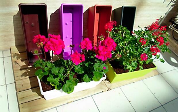 2 geranios +  jardinera color + tierra