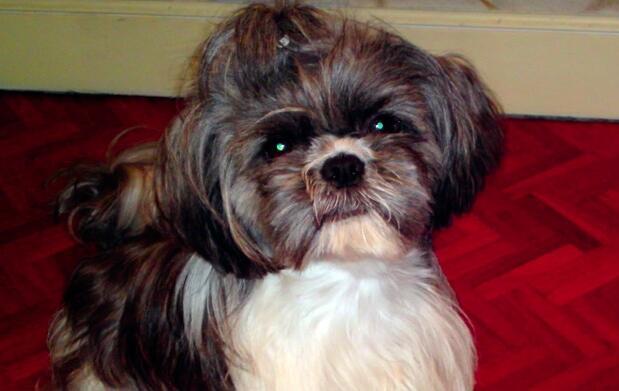 Tu perro limpio y peinado por 16,5€