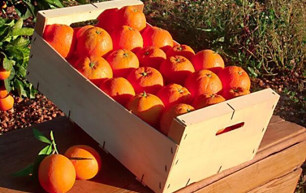 Naranjas Navelina y Mandarinas Clemenpon