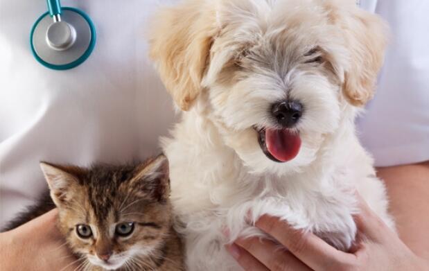 Vacunas, protección para tu mascota