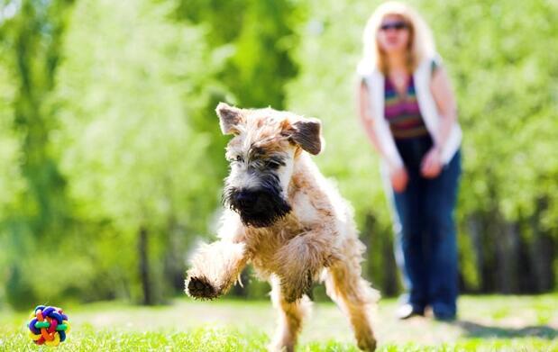 Clases de adiestramiento canino