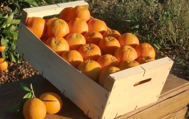 Naranjas de mesa en caja de 16 kg
