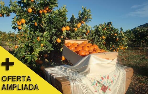Naranjas de mesa  o zumo en caja de 16 kg