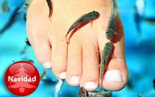 Fish Pedicure Cava & Sweet