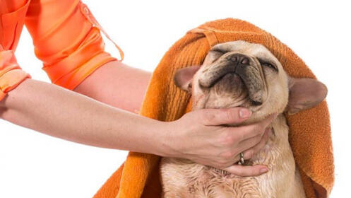 Masaje terapéutico con reiki o baño spa para tu mascota