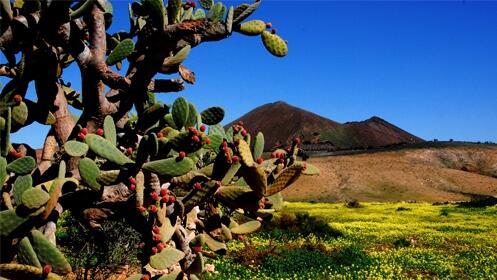 Fuerteventura en Marzo, 7 noches + traslados y hotel 3*