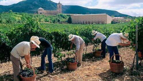 Visita a bodegas Irache en Navarra ¡Aperitivo y botella de vino de regalo!