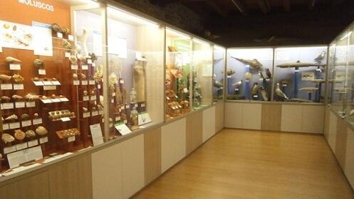 Disfruta de una visita en Hontza Museoa
